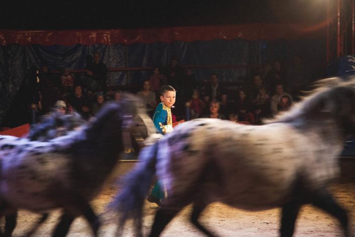 Zirkuspferde