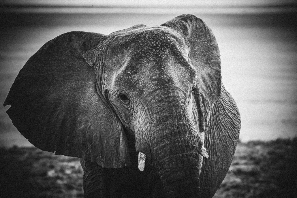 Namibia Elefant