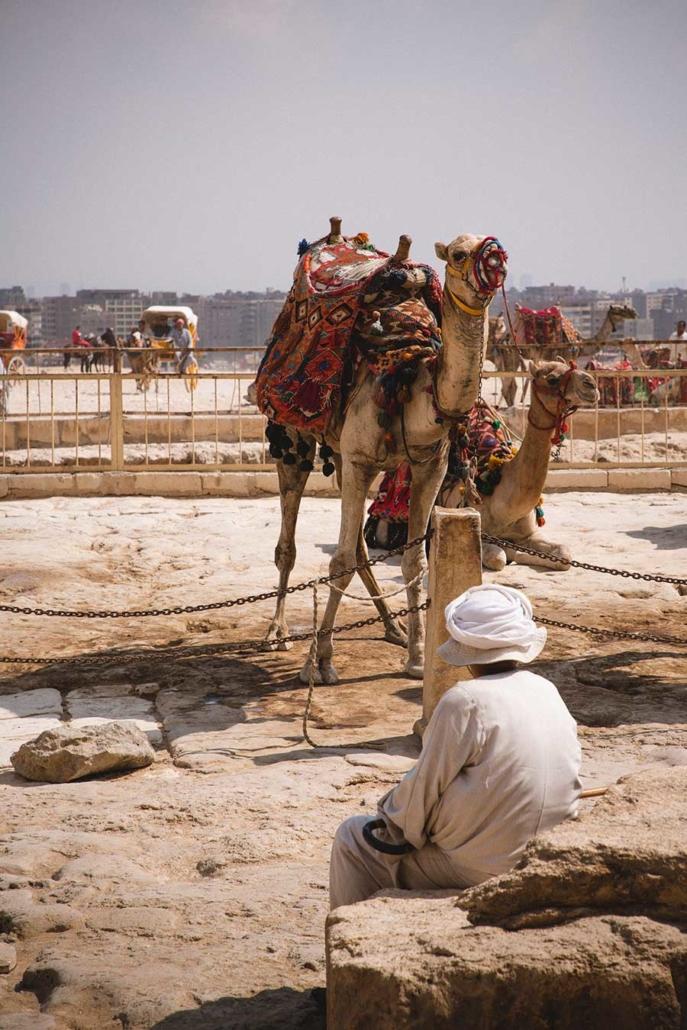 Reportagefoto Kamel in Kairo