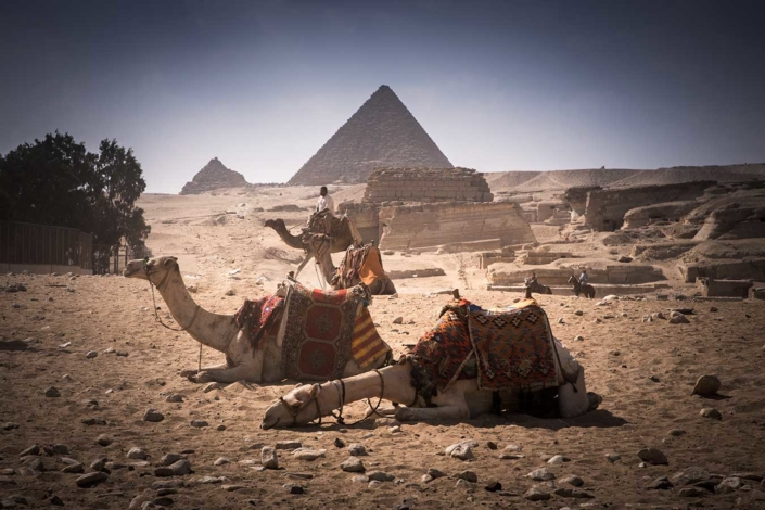 Reportagefoto Menschen in Kairo Kamele und Pyramiden