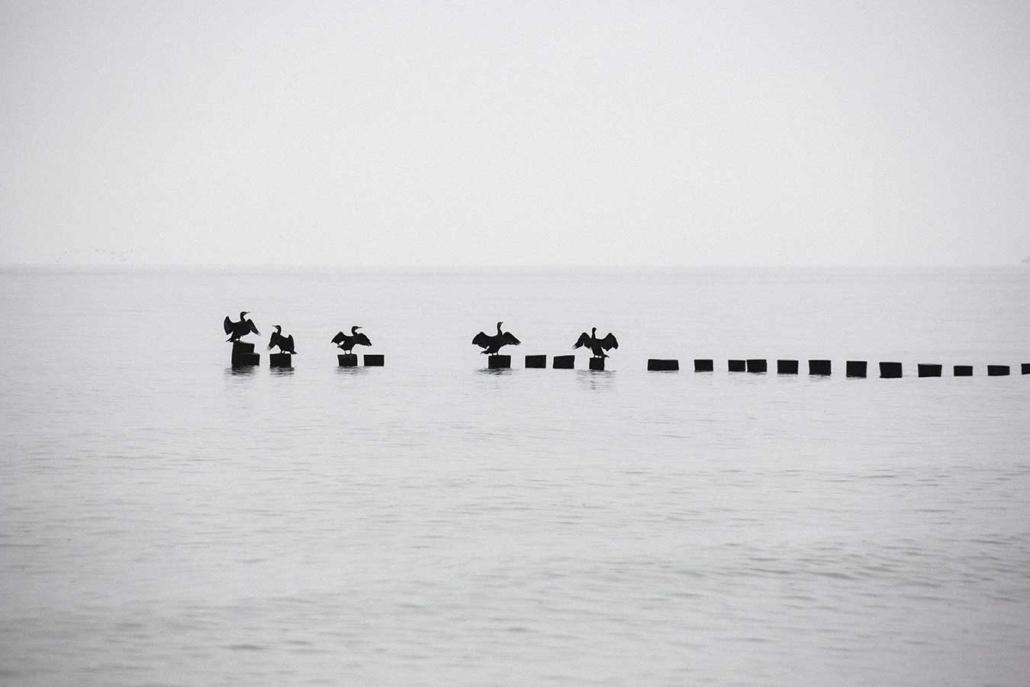 Ostsee Vögel