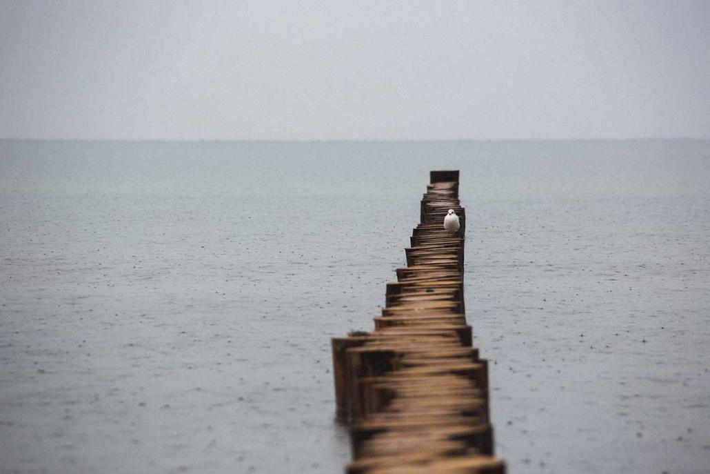 Reisefoto Ostsee Möwe im Regen