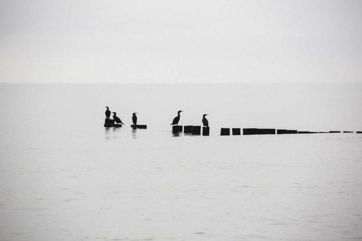 Reisefoto Ostsee Buhnen