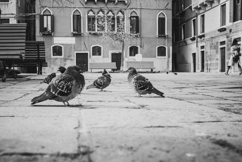 Venedig Tauben