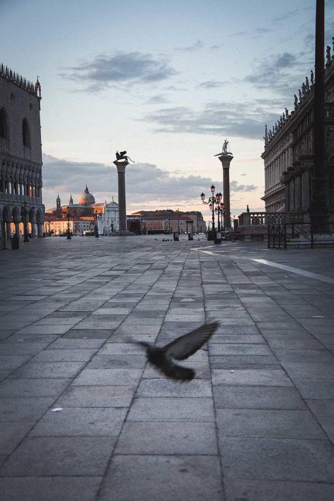 Venedig Markusplatz Taube