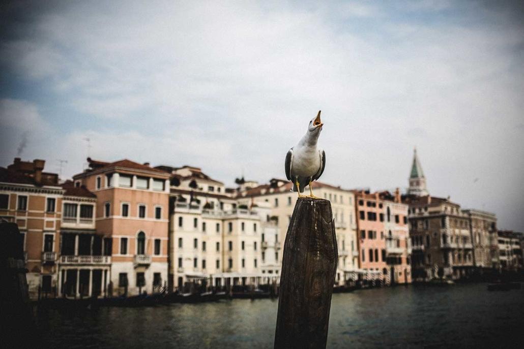 Venedig Möwe