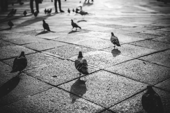 Venedig Markusplatz Tauben