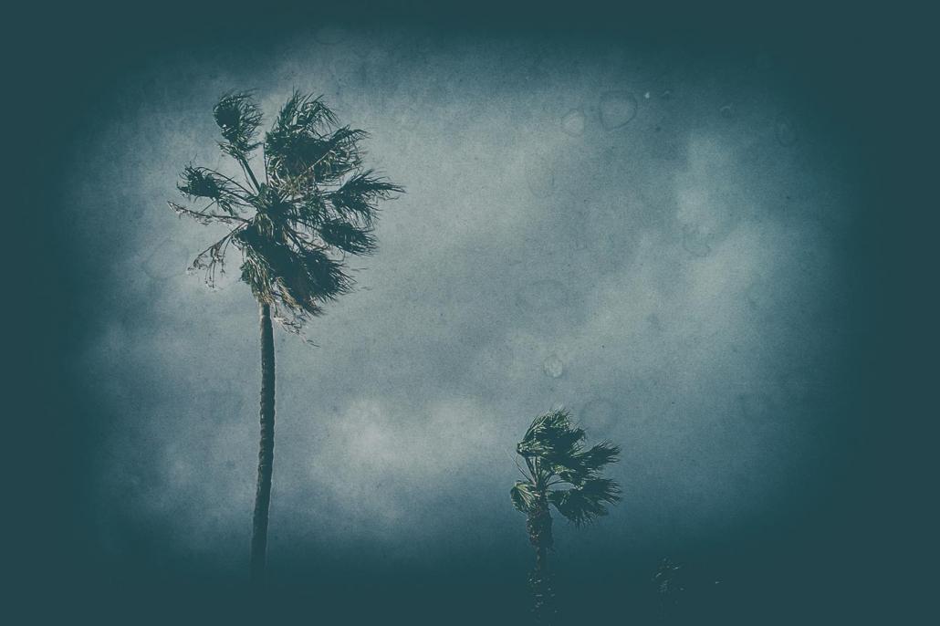 Palmen Farbfilm analoge Fotografie