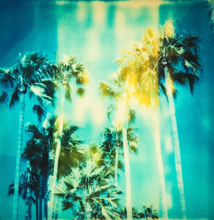 Polaroid SX70 Palmen analoge Fotografie