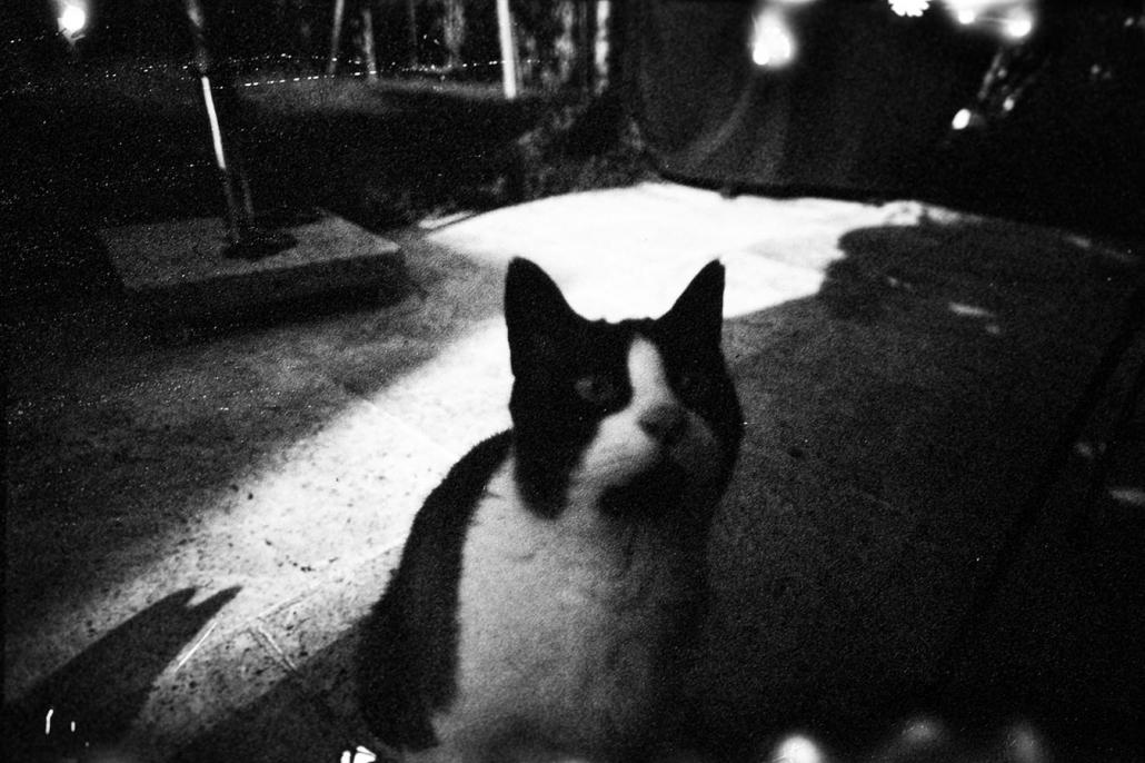 Polapan Katze analoge Fotografie