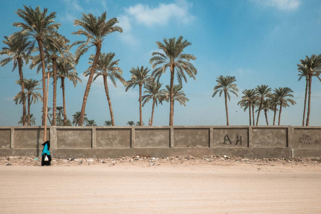 Kairo Palmen